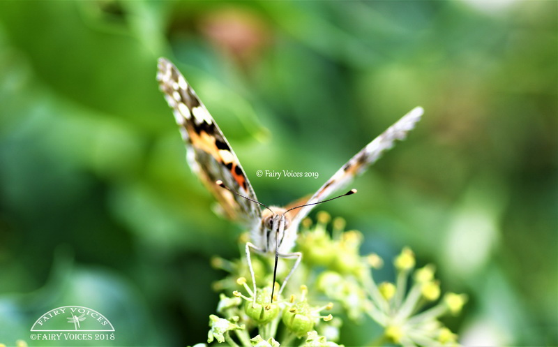 discover butterfly meaning