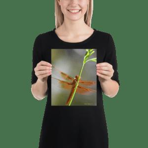 Dragonfly Fairy Afidouc Poster