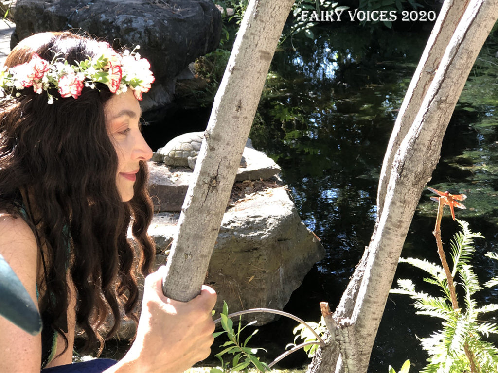 Fairy voices Nazan Saatci fairy dragonfly shootings in 2020